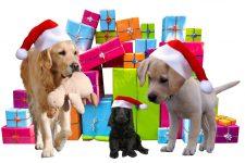 Dacă ai un cățel, salvează-l de Crăciun: Ce aliment îl poate îmbolnăvi grav?