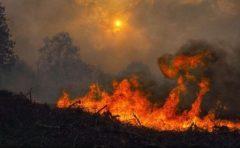 Patru morți în incendii în nord-vestul Spaniei; trafic rutier și feroviar, perturbat