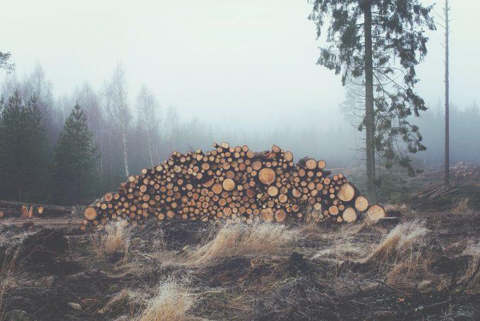 EIA lansează un raport despre JAFUL din pădurile României