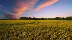 Eurostat: O treime din fermele din UE sunt în România, dar reprezintă doar 3, 4% din producţia blocului comunitar
