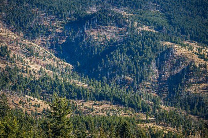 Fordaq: Starea pădurilor din România este bună; recoltăm mai puţină masă lemnoasă decât creşterea pădurii