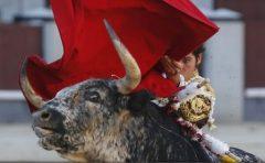 Franța: Un toreador spaniol a fost ucis de taur în timpul unei coride după ce s-a împiedicat în ring