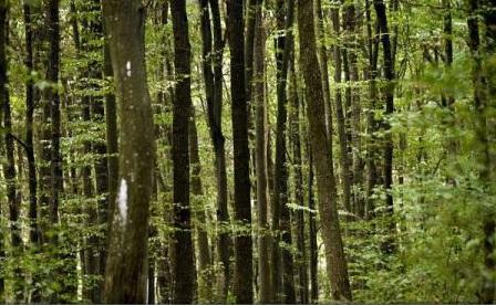 Garda de Mediu a închis 89 de exploatări forestiere și a dat amenzi de peste 3 milioane de lei