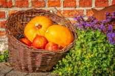 Halloween: Spania şi România, printre cei mai mari producători de dovleac din UE
