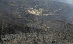 Incendii în Portugalia: bilanțul a crescut la 42 de morți