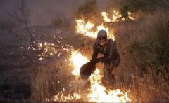 Incendiile au distrus deja 118.000 de hectare în Portugalia în 2017