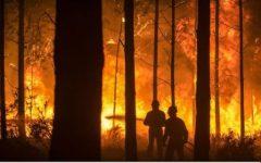 Incendiile de vegetație din Portugalia au provocat moartea a cel puțin 20 de persoane, potrivit unui bilanț provizoriu