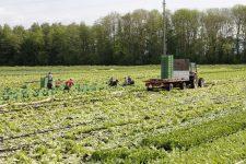 Locuri de muncă sezonieră în AGRICULTURĂ — SPANIA — CAMPANIA 2018
