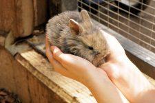 Maramureş: Expoziţie inedită cu animale mici de casă şi păsări; copiii şi elevii aşteptaţi la eveniment