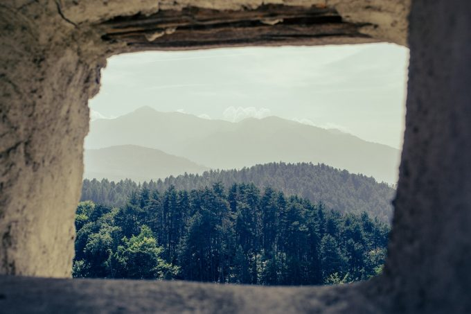 Ministrul Mediului: În primăvară, va demara cea mai amplă campanie de împădurire pe care a avut-o vreodată România