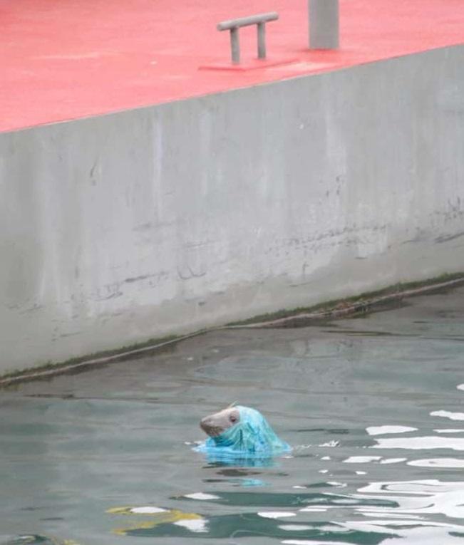 O imagine cu o focă având pe cap o pungă a declanşat o dezbatere online pe tema utilizării plasticului