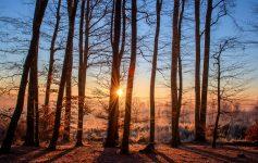 Pădurile din arii naturale protejate în pericol? Din ce cauză pot fi în pericol?