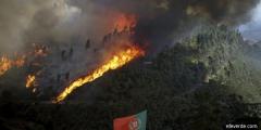 Portugalia: Incendiile de vegetație au afectat 95.000 de hectare