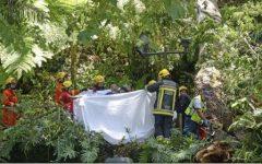 Portugalia: Numeroși morți și răniți după prăbușirea unui copac secular în Madeira