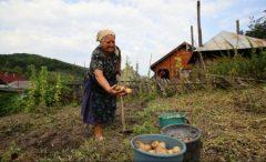 România pe primul loc în UE la ponderea populației ocupate în agricultură