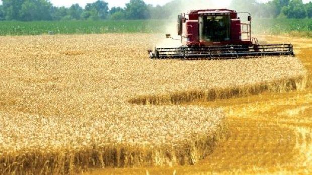 România, printre statele cu cea mai ridicată valoare a producției agricole din Uniunea Europeană