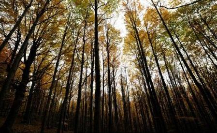 Romsilva a propus includerea în Patrimoniul Național UNESCO a două păduri din Parcul Național Cozia