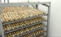 Scandalul ouălor contaminate cu insecticid se extinde în opt state din UE