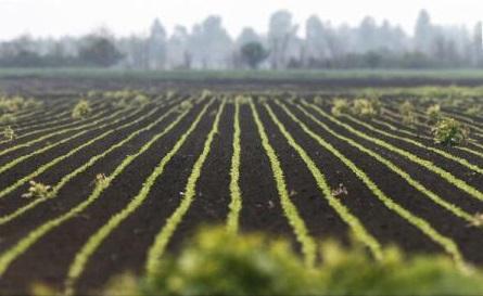 Serbia restricționează vânzarea terenurilor agricole către cetățenii din UE