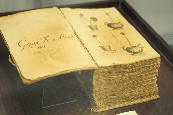 Sibiu: Expoziţie cu plante anticancerigene din România, proiect al Muzeului de Istorie Naturală