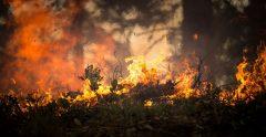 Spania: Arestarea unui bărbat suspectat că a provocat un incendiu de pădure violent în 2017