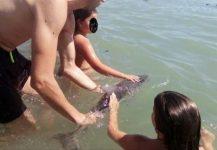 Spania: Moartea unui pui de delfin, înconjurat de turiști în apă, a generat un val de indignare