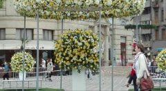 Timiș: Timfloralis, festivalul primăverii, dedicat 'Capitalei Culturale Europene 2021'