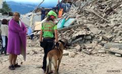 VIDEO Cel puțin 14 persoane au decedat în cutremurul de 6,2 grade din Italia