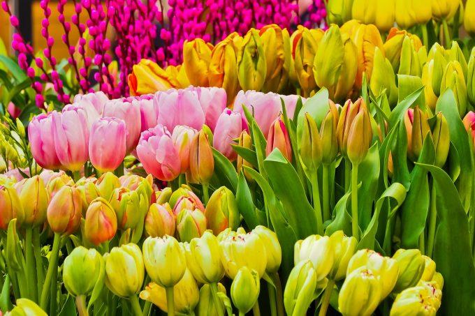 Aproape 1,4 milioane de români sărbătoresc onomastica în Duminica Floriilor (sau Floriile)