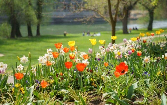 Bihor: Campanie de înfrumuseţare a parcurilor din Oradea, pentru a deveni un oraş al florilor
