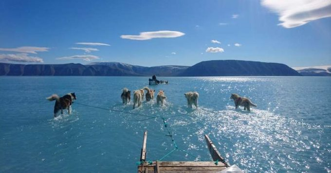 Câinii de sanie par să păşească pe apă într-o fotografie realizată în Groenlanda pe fondul topirii gheţii