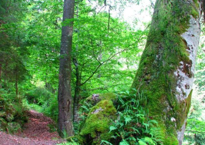 Catalogul pădurilor virgine şi cvasi-virgine din România a fost actualizat cu peste 5.100 de hectare