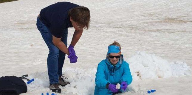 Coloniile de alge de pe gheţari ar putea reprezenta cheia pentru a înţelege impactul schimbărilor climatice