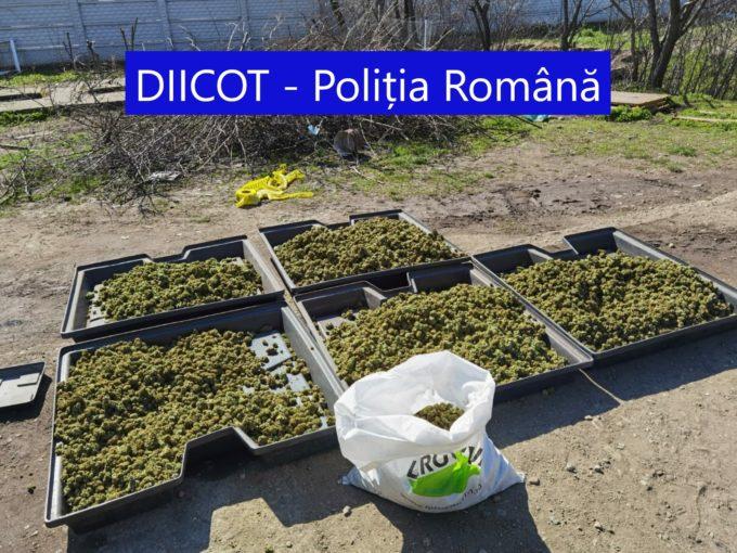 DIICOT - Craiova: Doi cetățeni spanioli inculpați pentru săvârșirea infracțiunii de trafic de droguri de risc