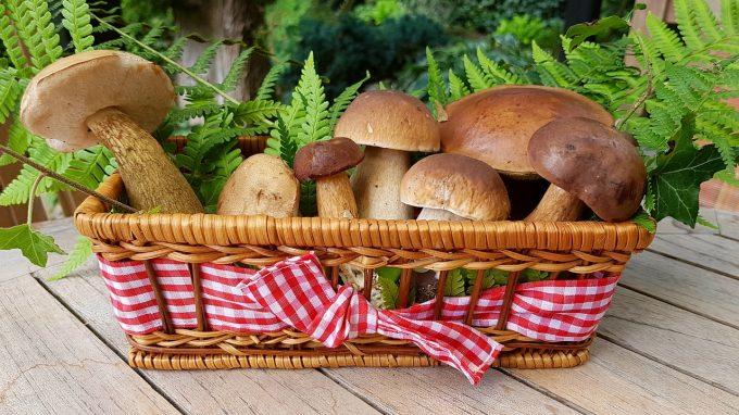Doi români condamnați în Franţa pentru că au cules prea multe ciuperci