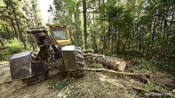 El trabajador muerto en Segura cuando talaba árboles es un rumano de 39 años