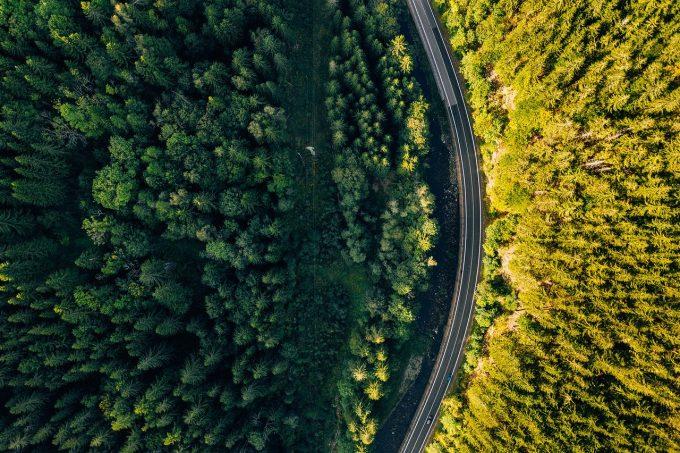 Europa a pierdut vaste arii forestiere în ultimii ani, potrivit unui studiu