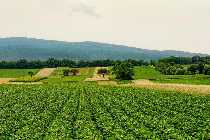 Familiile bogate din Germania cumpără terenuri agricole și din România