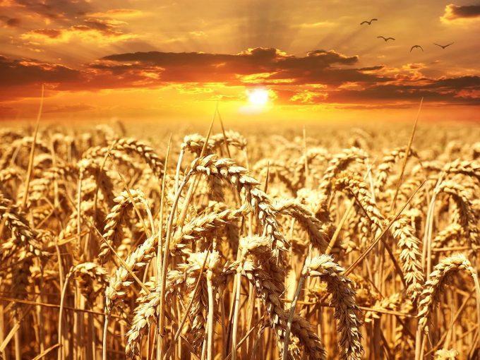 """""""Grânarul Europei?"""" - România, a opta putere agricolă a UE în 2018"""