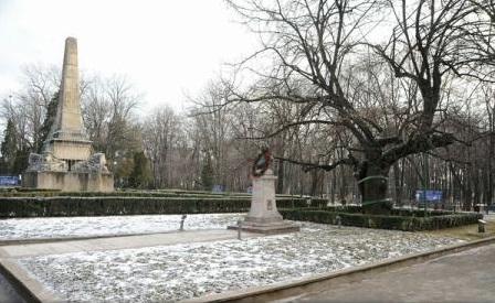 Iași: Teiul lui Eminescu este în pericol din cauza zăpezii