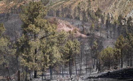 Incendiu de pădure violent, la granița franco-spaniolă; Peste 150 de hectare au fost afectate