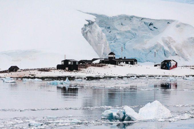 Microparticule de plastic, identificate în dieta pinguinilor din Antarctica (studiu)