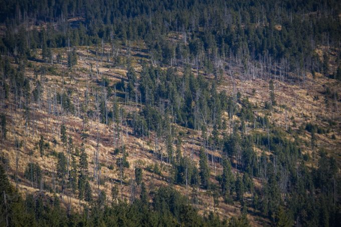 Ministerul Mediului, de Ziua Internaţională a Pădurilor: În 2021, ne-am propus să plantăm zeci de milioane de puieţi în întreaga ţară