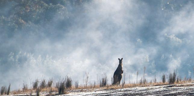 O studentă acţionează în instanţă Guvernul Australiei pentru ''dezinformare'' în legătură cu riscurile încălzirii globale