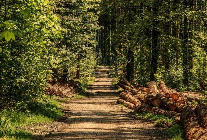 Organizaţiile de mediu: Parlamentarii vor să ofere din nou monopol marilor companii de pe piaţa lemnului din România