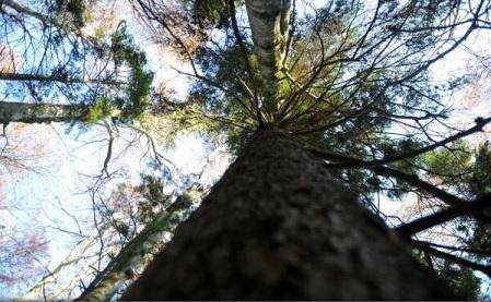 Păduri seculare de fag din România, înscrise în Patrimoniul Mondial UNESCO