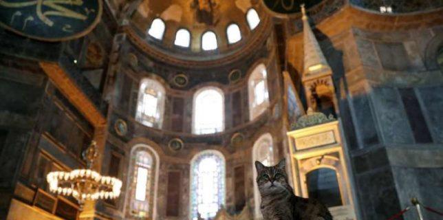 Pisica Gli poate rămâne, chiar dacă Sfânta Sofia a fost transformată în moschee