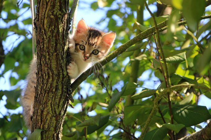 Pisicile de casă care sunt lăsate şi afară au un risc de trei ori mai mare de infecţii parazitare