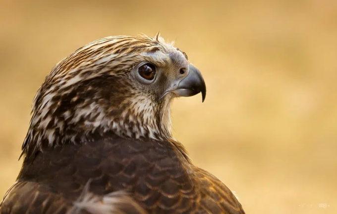 Raport: Aproape 20% din speciile de păsări din Europa sunt ameninţate cu dispariţia