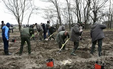 Romsilva a regenerat 11.612 hectare de pădure din fondul forestier de stat, în campania de primăvară